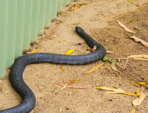 Spot a Snake? Learn More from Our Pest Control Experts