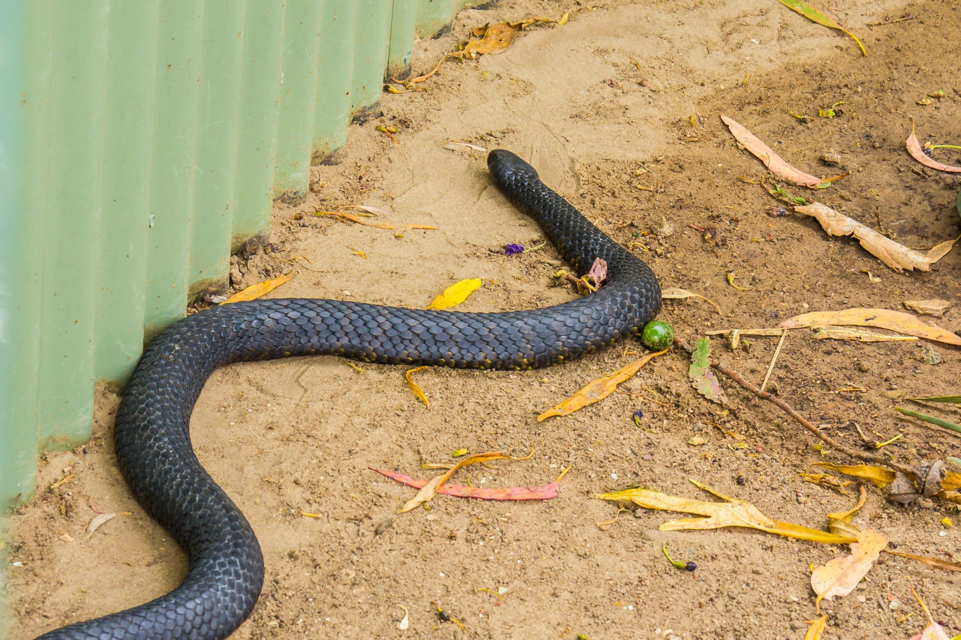 Spot a Snake Near Your Home? Learn More from Our Pest Control Experts | Pest Control Bowie | Raven Termite & Pest Control