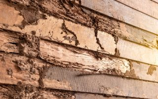 Prepare for Your Home Inspection with a Termite Expert | Pest Control Bowie | Raven termite & Pest Control