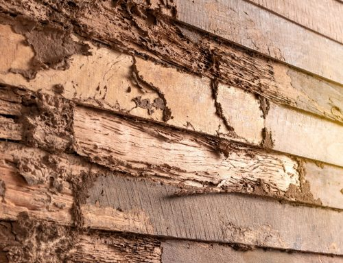Prepare for Your Home Inspection with a Termite Expert