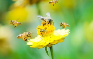 Learn About the Bees and the Wasps Outside Your Home   exterminator in Rockville   Raven termite & Pest Control