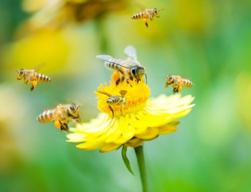 Learn About the Bees and the Wasps Outside Your Home