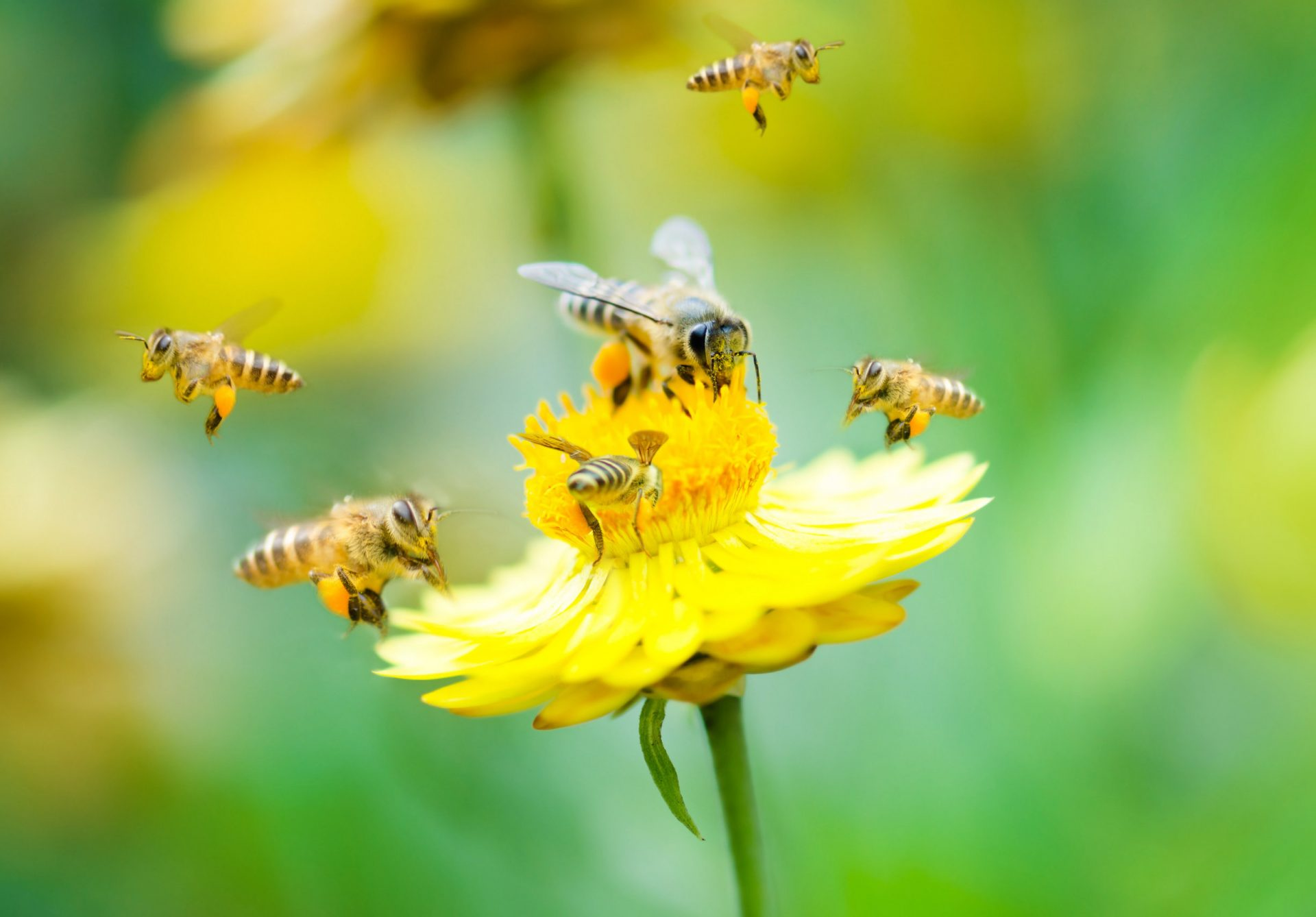 Learn About the Bees and the Wasps Outside Your Home | exterminator in Rockville | Raven termite & Pest Control