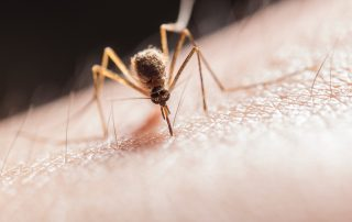 Mosquitos Running You Out of Your Yard? Take Back Control Today! | Pest Control in Pasadena | Raven Termite & Pest Control