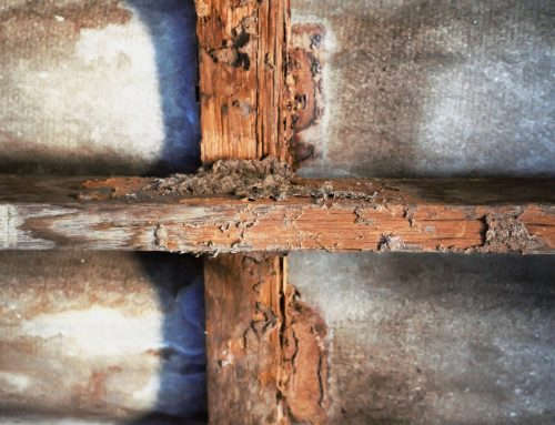 Termite Inspections are Necessary with a New Home