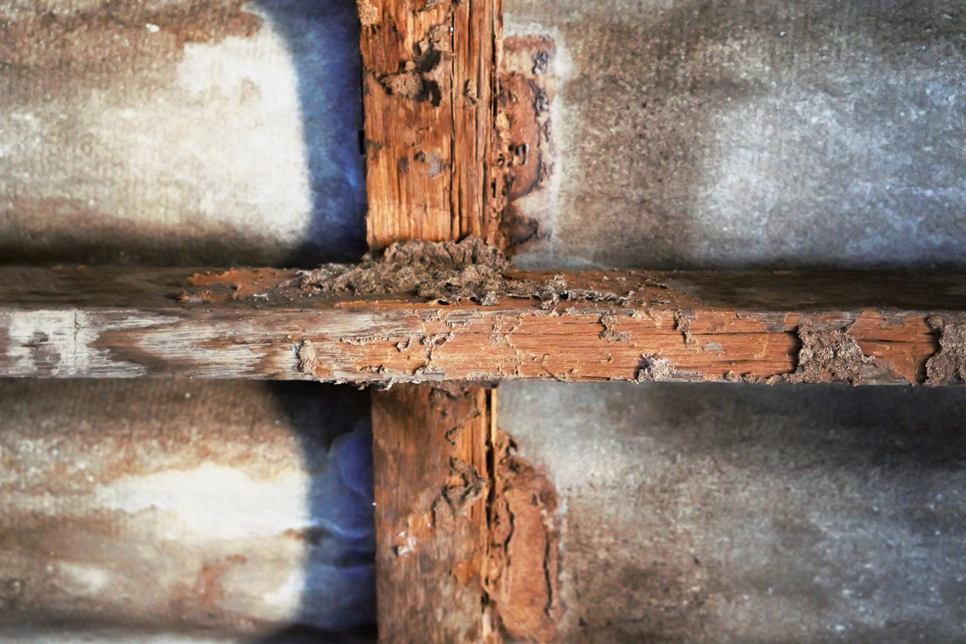 Termite Inspections are Necessary with a New Home | exterminator in Glen Burnie | Raven Termite & Pest Control