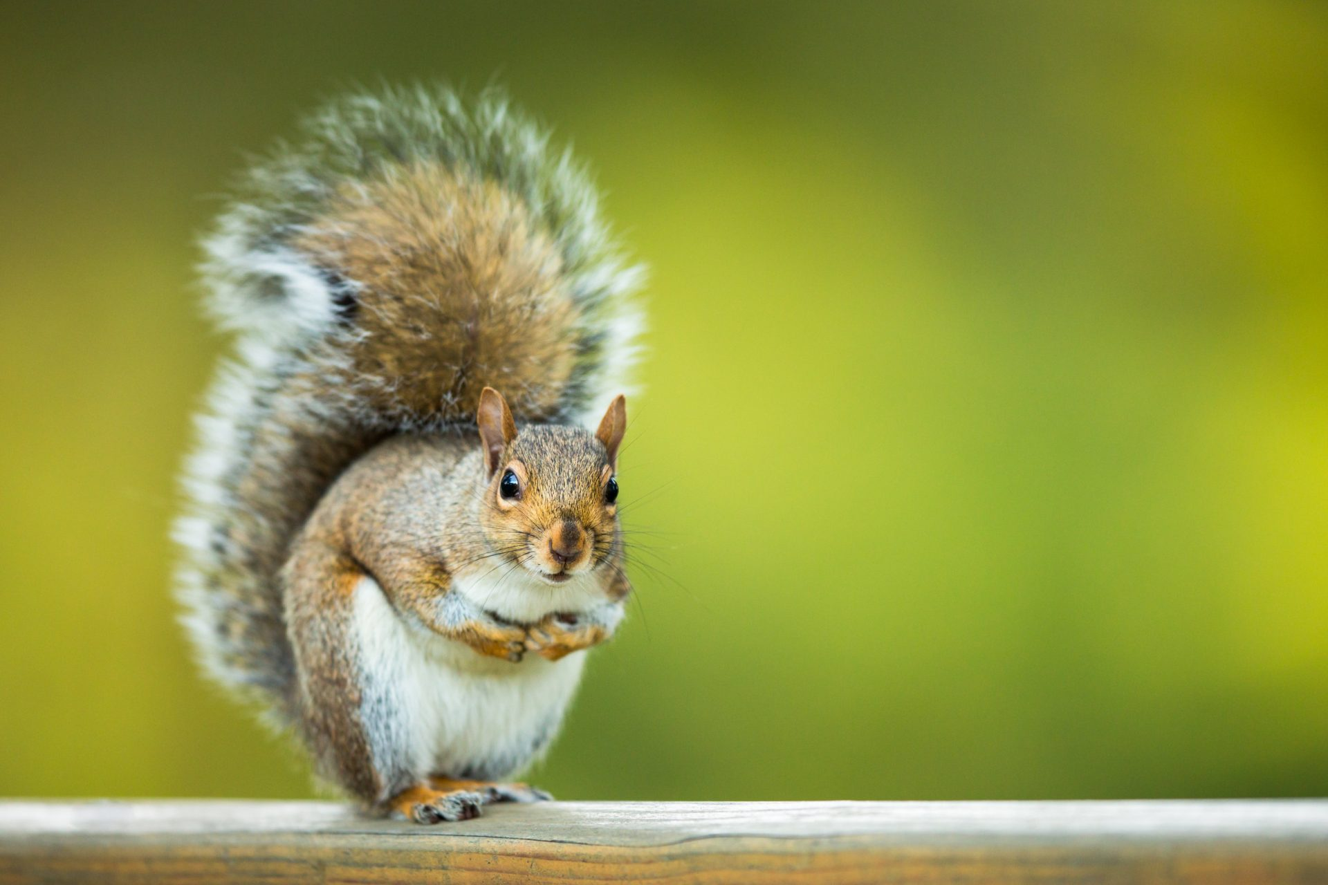 Get Rid of Squirrels on Your Property | Pest Control in Pasadena | Raven Termite & Pest Control